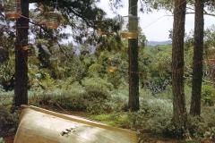El árbol de las quimeras, 2001